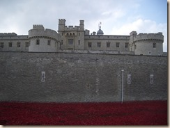 Tower poppies-1
