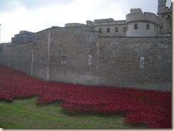 Tower poppies-2