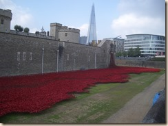 Tower poppies-3