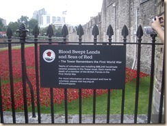 Tower poppies-6