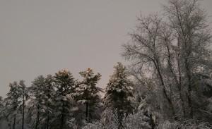 trees for blog